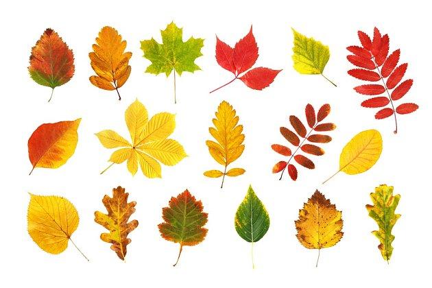 Listí rozmanitých barev a tvarů.