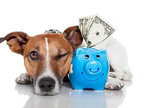 Která psí plemena vás přinutí sáhnout hlouběji do peněženky?