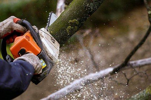 Silně napadené větve odřežte a spalte.