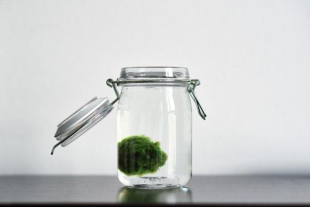 Řasokouli můžete umístit i do sklenice s vodou.