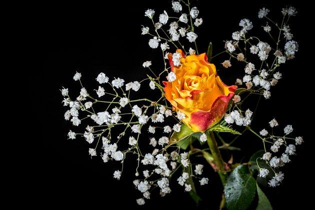 Větvička šateru dokáže z jediného květu růže vyčarovat atraktivní dekoraci.