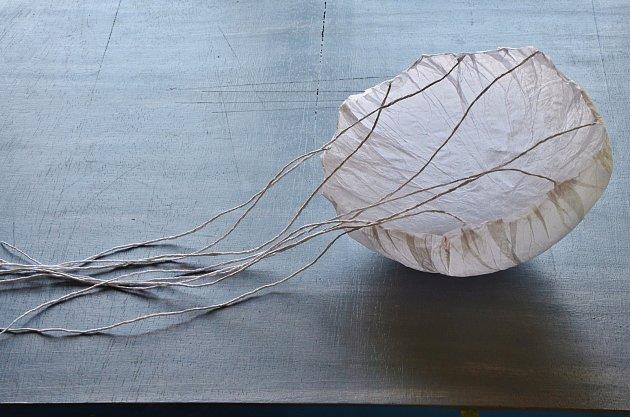 Vrchní zvon papírové medúzy