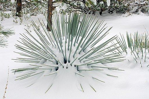 juka pod sněhem