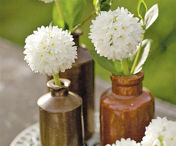 prvosenka zoubkatá (Primula denticulata var. alba.)