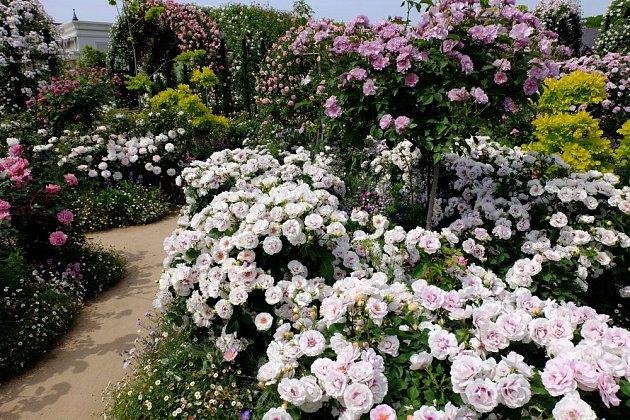 Růžová zahrada plná barev a vůní
