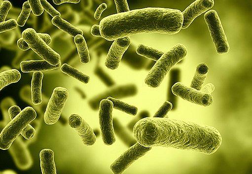 je rozdíl mezi bakteriální a virovou infekcí