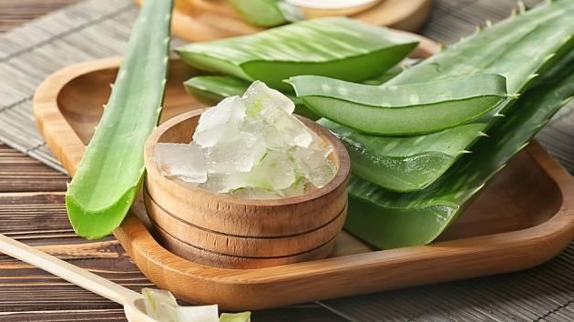 Aloe vera gel může posloužit i k výrobě přírodního mýdla.