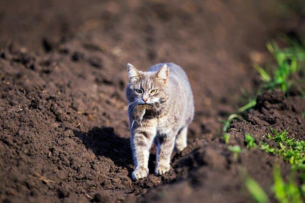 Pořiďte si kočku, ta všechny hlodavce vychytá.