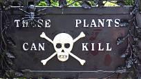 Rostliny - zabijáci