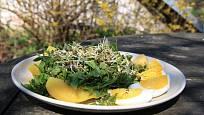 Pokrm obohacený naklíčenou čočkou a čerstvými bylinami