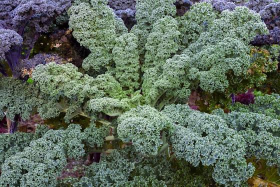Kadeřávek je pohledná zelenina