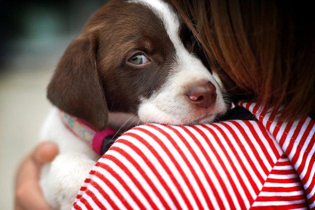 Na Nový rok jsou útulky plné vyděšených ztracených psů