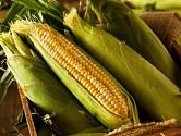 Víte, na co použít kukuřičné slupky?