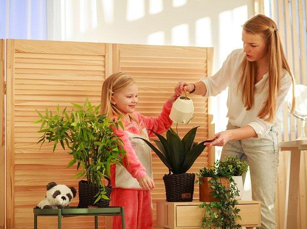 Pokojové rostliny si zaslouží celoroční péči, na jaře byste se jim měli věnovat ještě více