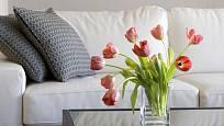 Stonky tulipánů se otáčejí za světlem.