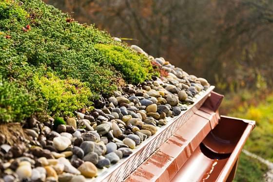 Detailní pohled na zakončení extenzivní zelené střechy.