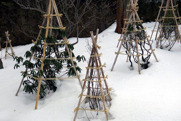 Keře ochrání před těžkým sněhem i pouhá konstrukce stříšek