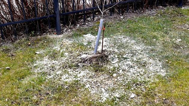 Dolomitický vápenec je skvělé přírodní minerální hnojivo