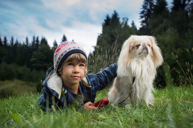 Jaonský chin patří mezi tiché psy.