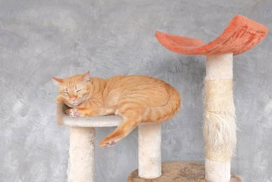 Plyšová odpočívala jsou pro kočky lákavá