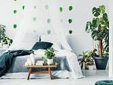 Rostliny v ložnici