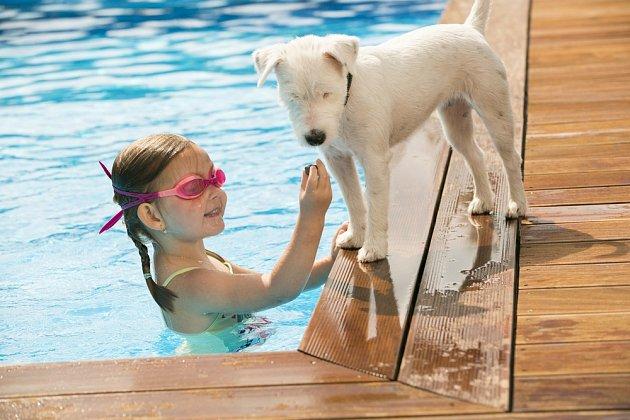 Na psy bychom měli v blízkosti bazénů dávat zvýšený pozor.
