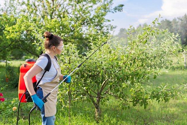 Pihovitosti jablek také můžete předejít mimokořenovou výživou.