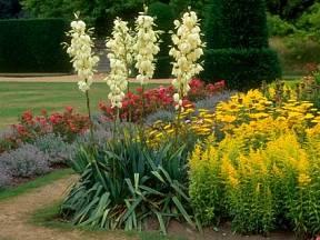 Na vaší zahradě můžete juku vysadit v podstatě kamkoliv.