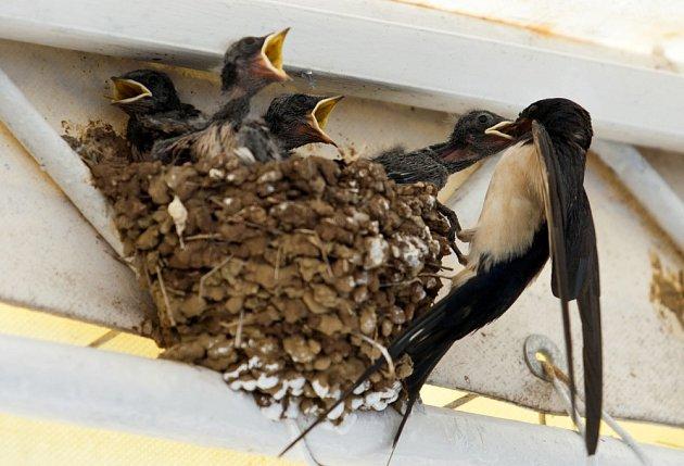 Ptačí trus je prvottřídní hnojivo
