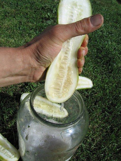 Vytlačení semen z rozříznutého plodu do sklenice