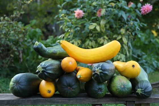 Cuketové zelí vyřeší velkou úrodu.
