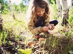 V jaké části republiky jsou aktuálně houbařské žně