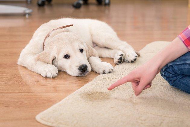 U většiny psů dostatečně zapůsobí již zvýšený hlas.