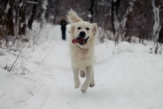 Procházky v zimě jsou pro psa stejně důležité jako v jiném ročním období.