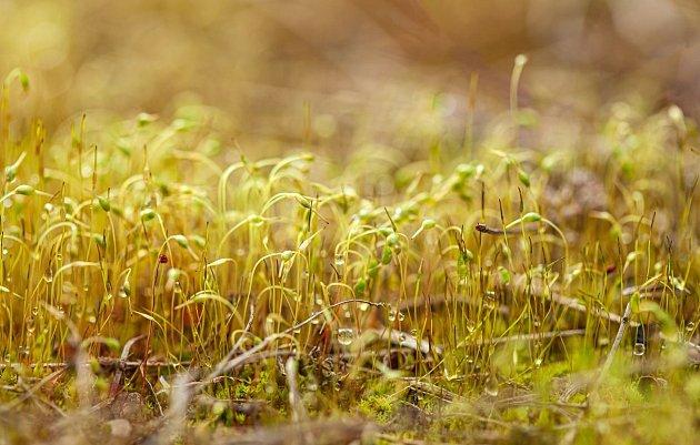 Díky mykorhíze můžeme mít lepší úrodu