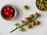 Znáte liči rajčátka pocházející z Jižní Ameriky?