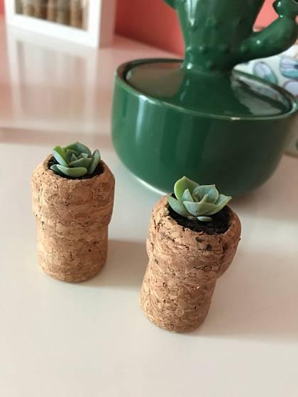 Miniaturní sukulentní rostliny vysazené do korkových zátek.