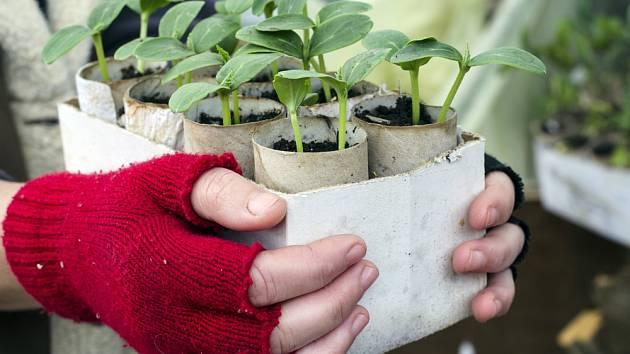 Zahradničení v týdnu mezi lednem a únorem: výsevy i prořezávky