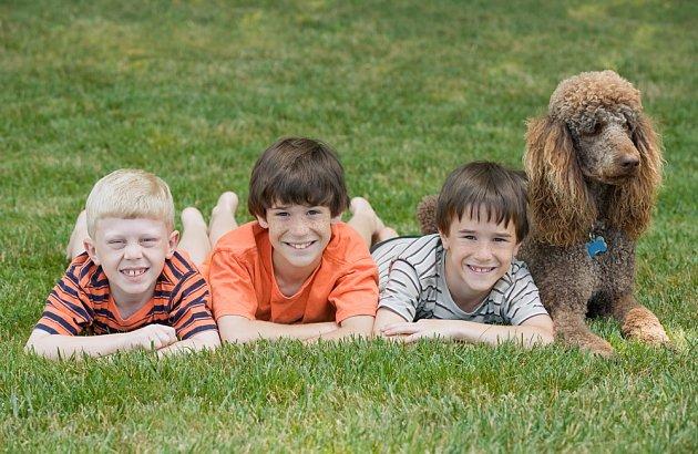 Pudl je jedním ze psů, který si nejlépe rozumí s dětmi.