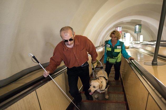 Trénink vodícího psa na eskalátorech.