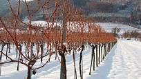 Vinice v zimě odpočívá.
