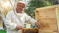 Propolis můžete nejlevněji koupit rovnou u včelaře.