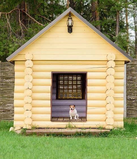Moje psí bouda - moje teritorium.