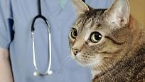 Od trichobezoárů hrozí zvířatům ucpání žaludku i střev.