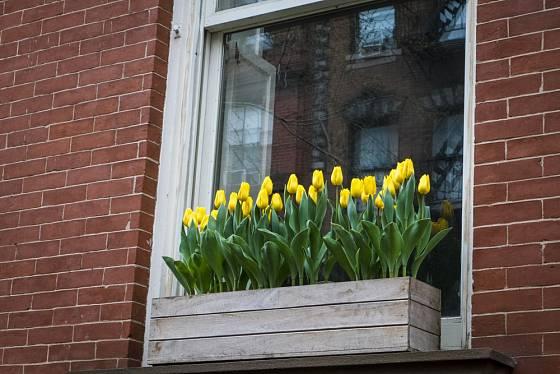 Truhlík osázený pouze žlutými tulipány vypadá báječně, ale pokvete pouze krátký čas.