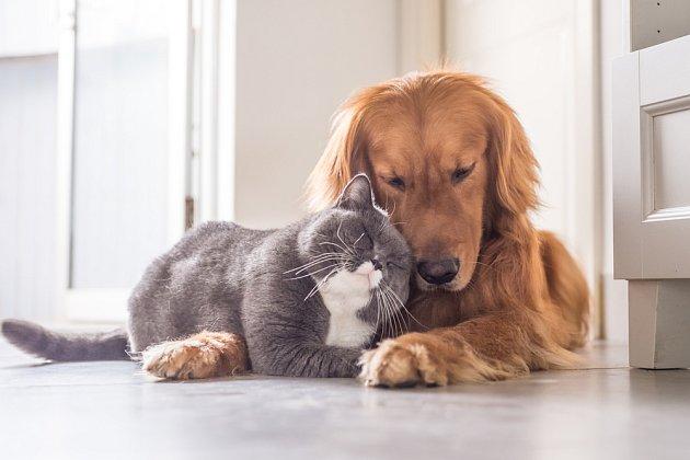 Mezi kočkou a psem často vznikne velké přátelství.