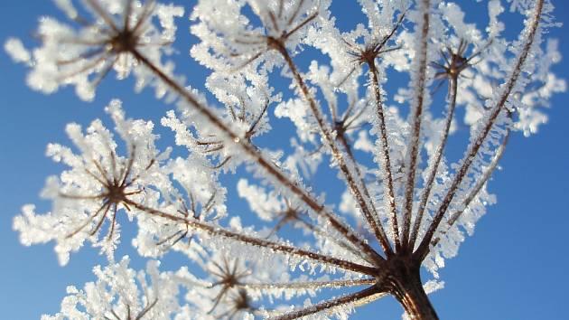 Mráz dokáže v zimní zahradě vyčarovat kouzelné detaily.