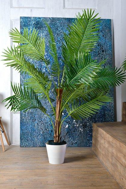 Palma areka je častým hostem naších domácností.