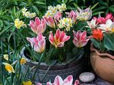 """Nejvhodnější jsou hliněné květináče, které """"dýchají"""" a lépe izolují."""