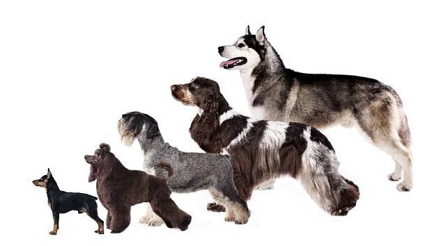 Nejkrásnější pes? Každý to vidí trochu jinak.